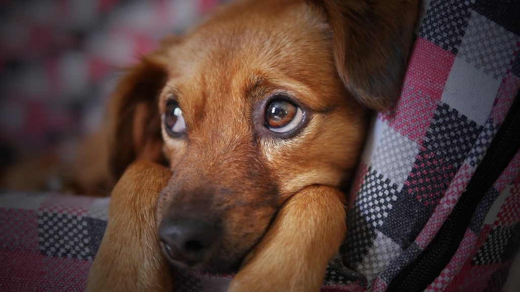 B12 Shots for Dogs - 10 Health Benefits