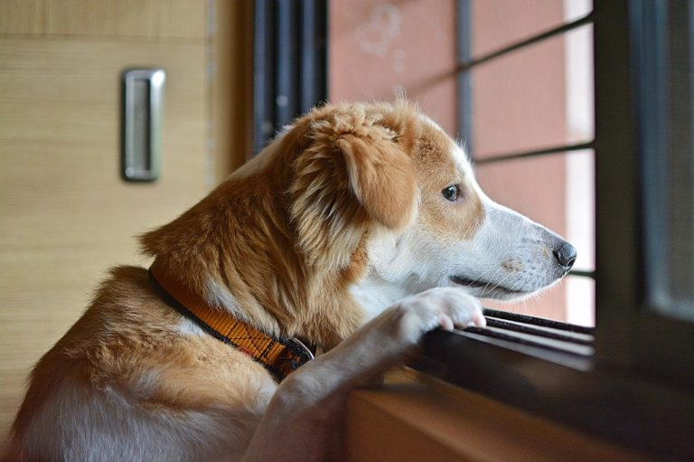 Kidney Failure in Dogs, What you Need to Know