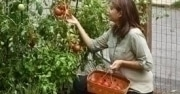 Unemployed Plant a Garden for Food, Seekyt