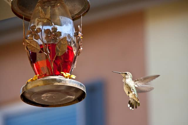 Best Hummingbird Feeder Product Review