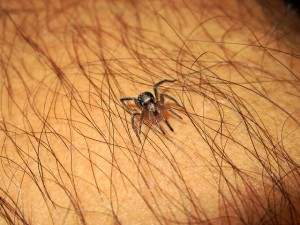 Lyme Disease Prevention – Symptoms, Seekyt