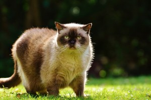 Where to Shop for Low Carbohydrate Cat Food, Seekyt