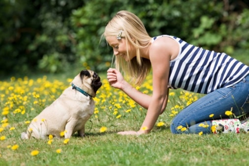Is Your Dog Suffering From Allergies: Try the Following Tips, Seekyt