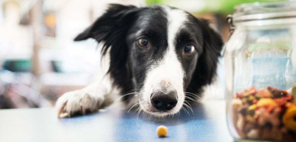 6 Types of Nutrients Your Dog Needs, Seekyt