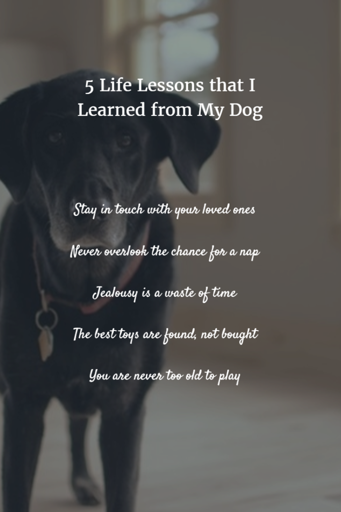 The 5 Life Lessons Learned from Dogs, Seekyt