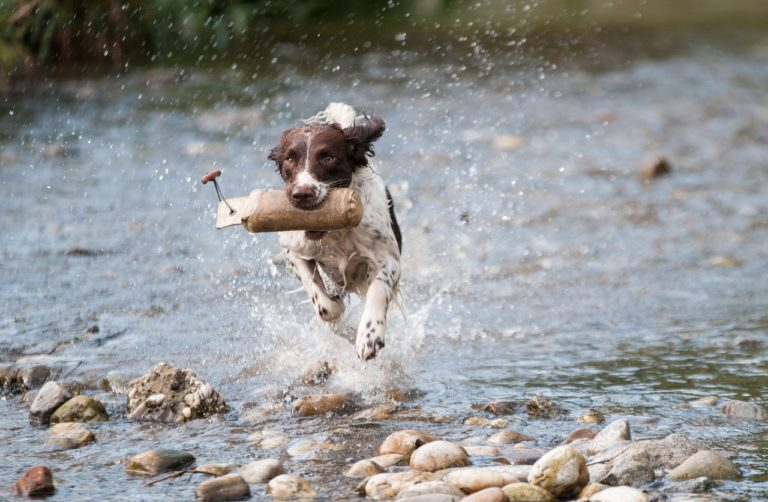 The 5 Life Lessons Learned from Dogs