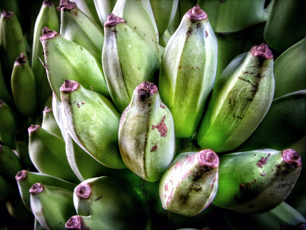 Incredible Health Benefits of Bananas, Seekyt